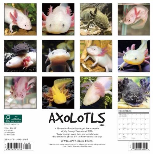 Axolotls 2022 Wall Calendar Perspective: top