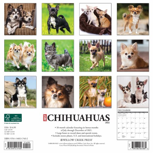 Just Chihuahuas 2022 Wall Calendar (Dog Breed) Perspective: top