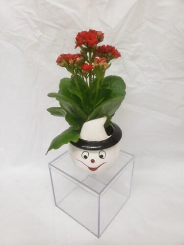 Set of 4 Miniature Plants in Halloween Ceramic Pots Perspective: top