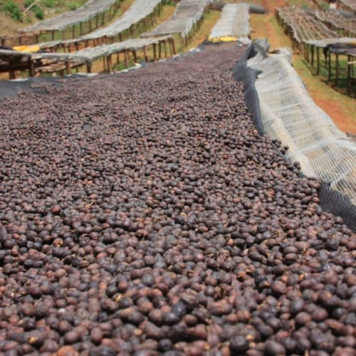 Premium Kaya Kopi Yirgacheffe  Ethiopian Arabica Specialty Roasted Ground Coffee Beans 12oz Perspective: top