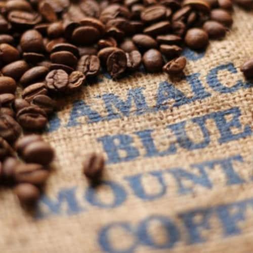 Premium Kaya Kopi Jamaican Blue Mountain Roasted Whole Coffee Beans Arabica Grade 1-12 Ounce Perspective: top