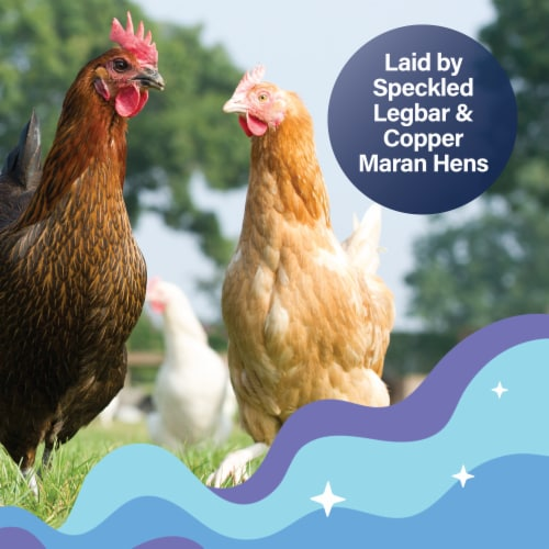 Happy Egg Co. Heritage Breed Free Range Blue & Brown Large Grade A Eggs Perspective: top