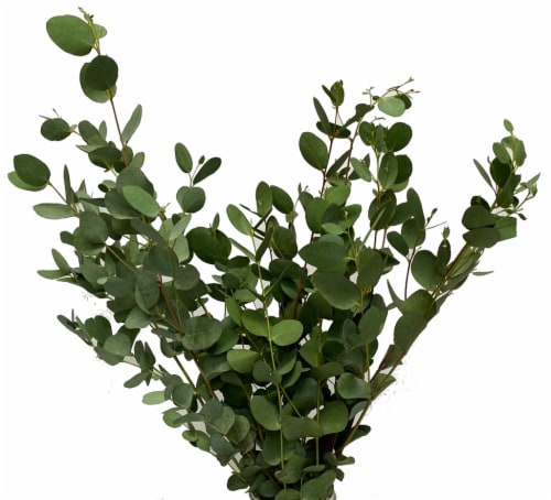 Eucalyptus Assortment Perspective: top
