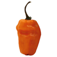 Peppers - Habanero