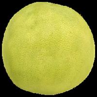 Grapefruit Pummelo