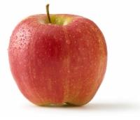 Autumn Glory Apple