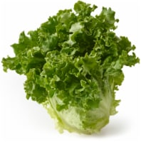 Lettuce - Green Leaf