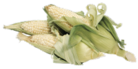 Corn on the Cob - White