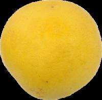 Grapefruit - White - Large