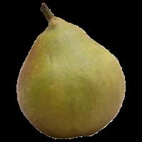 Pears - Seckel