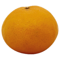 Seedless Clementines - 1 ct