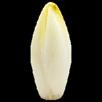 Lettuce - Endive - Belgium