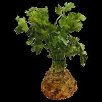 Celery Root - Bulk