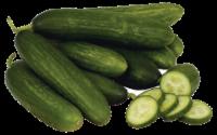 Cucumber - Persian