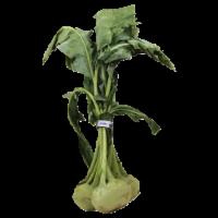 Kohlrabi Lettuce