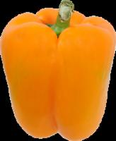Pepper - Bell - Orange