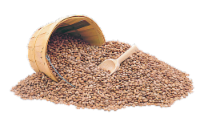 Dried Pinto Beans