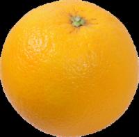 Organic Large Valencia Oranges