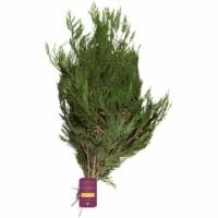 BLOOM HAUS™ Western Cedar Boughs 5 Count