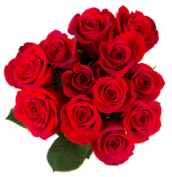 BLOOM HAUS™ Red Roses