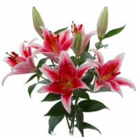 BLOOM HAUS™ Oriental Lily Bunch