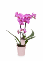 Mother Daughter Orchid Combo