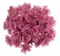Premium Poms - Purple / Lavender - 6-stem