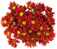 Premium Poms - Red / Orange