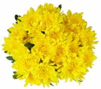 Premium Poms - Yellow