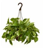 Exotic Angel Hanging Basket Plant