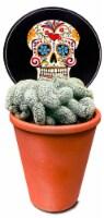 Brain Cactus Succulent - 3-inch pot