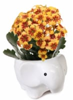 Wildlife Trio Planters with Kalanchoe Plant - Assorted