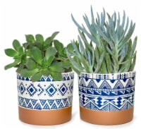 Geo Pattern Potted Succulent