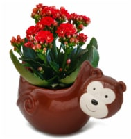 Come Hang Out Ceramic Calandiva Potted Plant - 2-inch pot