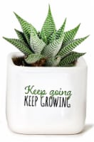 Watch Me Grow Ceramic Succulent