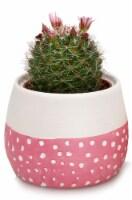 Blooming Cactus in Painted Sky Ceramic Pot