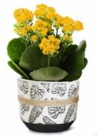 Calandiva in Ceramic Leaf Print Pot - 4-inch pot
