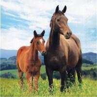 Creative Converting 339762 Wild Horse Napkins, 16 Count