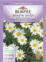 Burpee Shasta Daisy Silver Princess Seeds - White/Yellow
