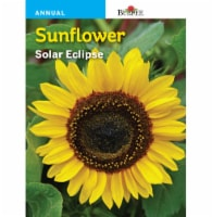 Burpee Sunflower Solar Eclipse Seeds