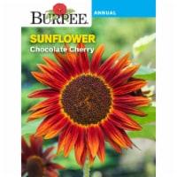 Burpee Chocolate Cherry Sunflower Seeds