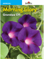 Burpee Morning Glory Grandpa Ott Seeds