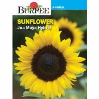 Burpee Sunflower Jua Maya Hybrid Seed Packet