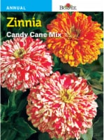 Burpee Zinnia Candy Cane Seeds Mix