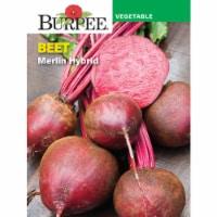 Burpee Beet Merlin Hybrid
