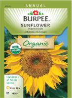 Burpee Mammoth Organic Sunflower Seeds