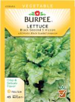 Burpee Black Seeded Simpson Lettuce Seeds - Green