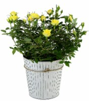 Tin Potted Yellow Rose (Approximate delivery is 2 - 7 days)