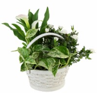 White Basket Potted White Garden Floral Arrangement (Approximate delivery is 2 - 7 days)