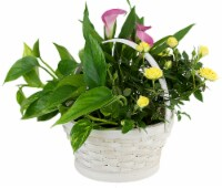 White Basket Potted Colorful Garden Floral Arrangement (Approximate delivery is 2 - 7 days)